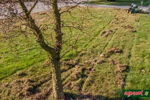 trawnik z liśćmi, trawnik zimą, trawnik jesienny, jak nawozić trawnik na jesień, wertykulacja