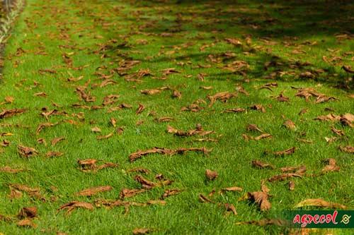 pielęgnacja trawnika, nawożenie trawnika, nawożenie trawy