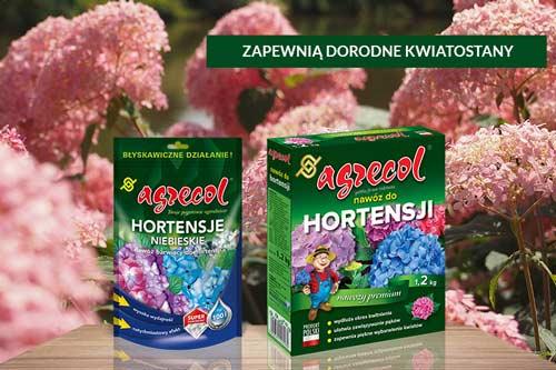 hortensja, nawóz do hortensji, pielęgnacja hortensji