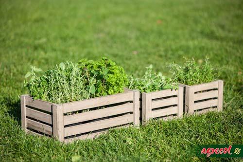 uprawa ziół, ogródek ziołowy, nawożenie ziół