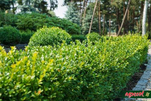 żywopłoty naturalne ogrodzenia, nawóz do żywopłotów, sadzenie żywopłotu, nawożenie żywopłotu