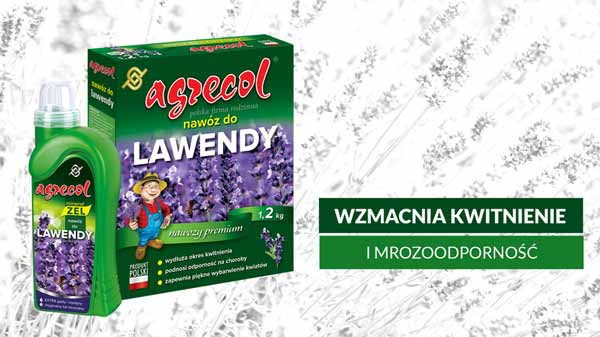 nawóz do lawendy, uprawa lawendy, hodowla lawendy