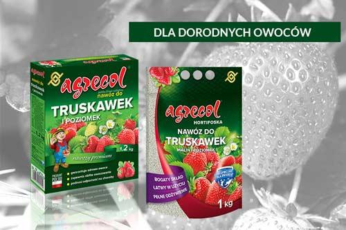 uprawa truskawek, nawożenie truskawek, nawóz do truskawek, hodowla truskawek