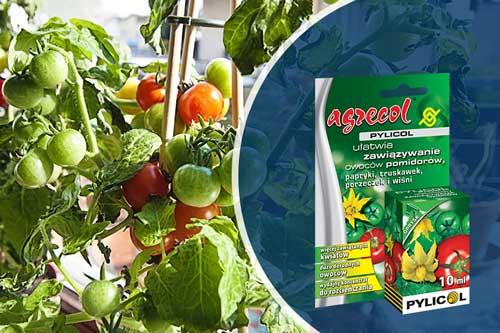 uprawa pomidorków koktajlowych, uprawa pomidorów koktajlowych na balkonie, pomidory na balkonie, nawóz do pomidorów, pylicol, jak ułatwic zawiazywanie owoców pomidorów