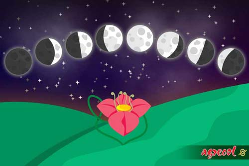 wpływ księżyca na rośliny, witek czuksanow