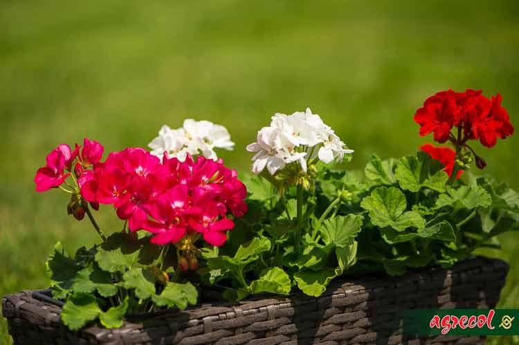 balkon pełen roślin, rośliny balkonowe, nawożenie roślin balkonowych, nawóz do roślin balkonowych