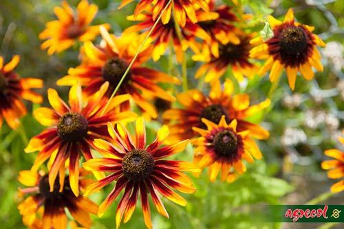 polskie byliny, ogród bylinowy, witek czuksanow, witold czuksanow