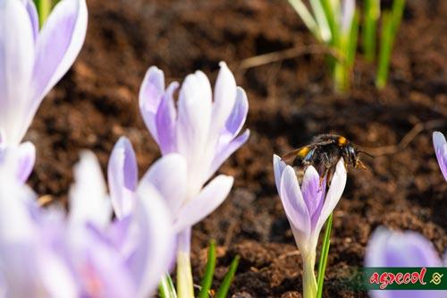 czego nie robić w ogrodzie, podstawy pracy w ogrodzie, poradnik początkującego ogrodnika, błędy w ogrodzie