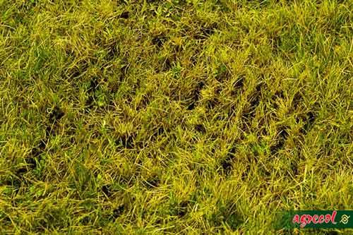 trawnik z liśćmi, trawnik zimą, trawnik jesienny, jak nawozić trawnik na jesień