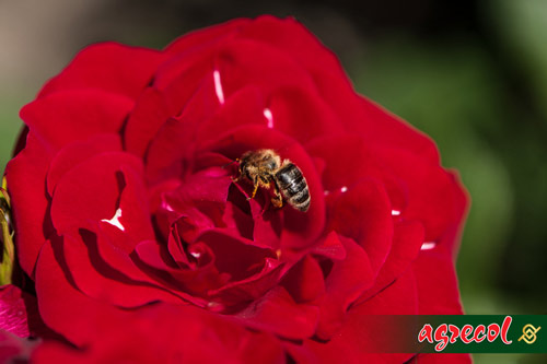 owady pożyteczne, przyjaciele naszego ogrodu
