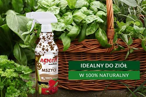 preparat na szkodniki ziół, skoczek melisowy, mszyce na ziołach, szkodniki na ziołach