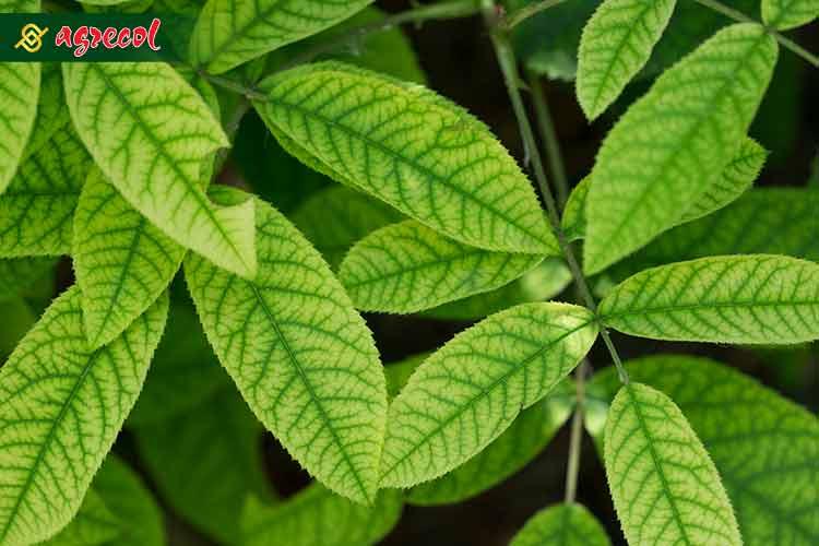 profilaktyka – sposób na ochronę roślin, ochrona roślin
