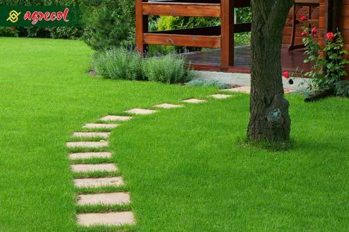 trawa, ścieżka, nawożenie trawnika,