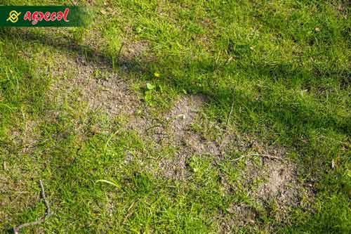 trawnik z ubytkiem, ubytek w trawniku