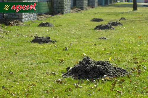 kret, zabezpieczanie ogrodu przed kretami, jak pozbyć się kreta