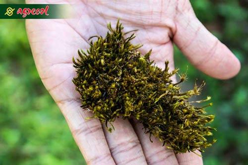 mech na trawniku, mech na trawie, mogeton, zwalczanie mchu na trawniku