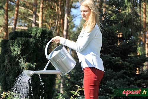 podlewanie ogrodu, jak podlewać ogród, kiedy podlewać