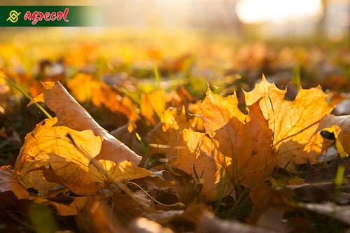 nawożenie jesienne, nawozy jesienne, nawóz jesienny