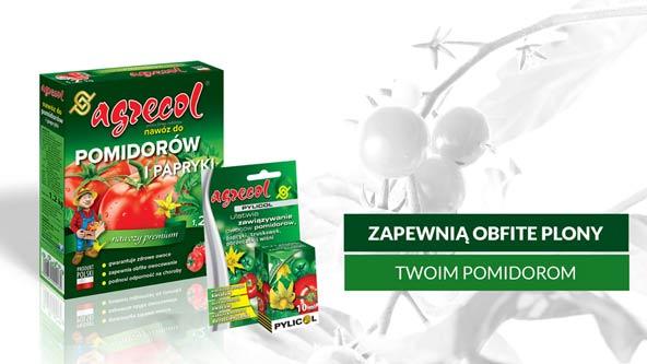 pomidor, pomidory zielone, nawóz do pomidorów