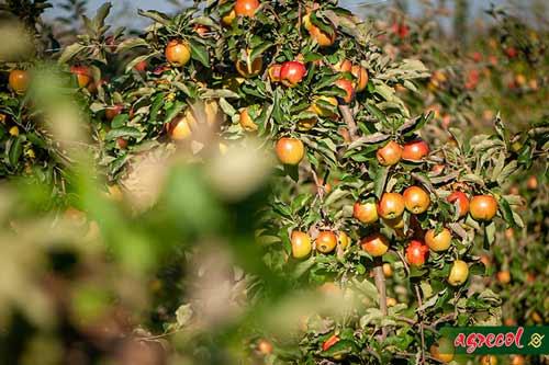 jesień w małym sadzie, sad owocowy, przygotowanie sadu do zimy