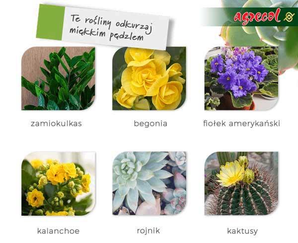 czyszczenie roślin domowych