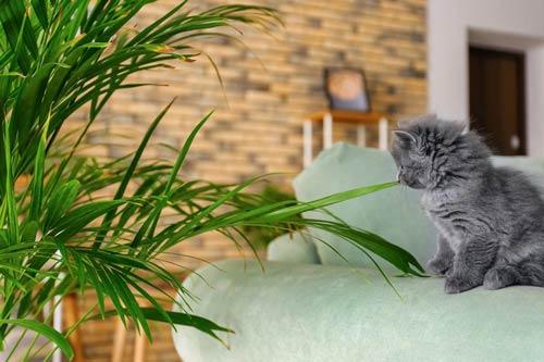 Kot I Rosliny W Domu Czyli Rosliny Bezpieczne I Trujace Dla Kota Agrecol