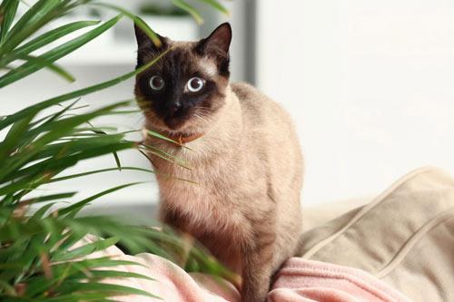 kot z rośliną, rośliny trujące dla kota