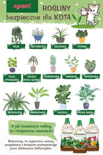 kot a rośliny