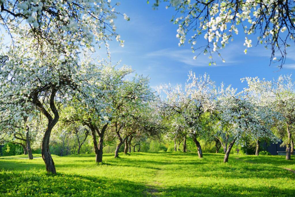 sad ekologiczny, odmiany jabłoni