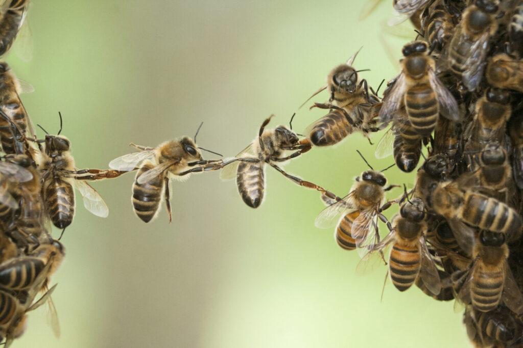 sprytne pszczoły