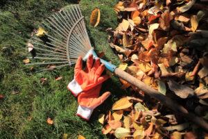 optymalny termin wapnowania to jesień